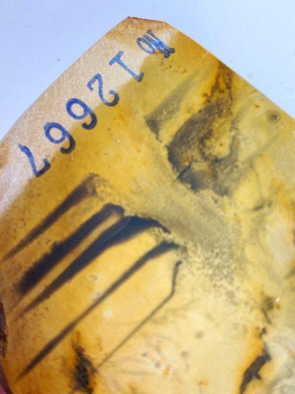 画像4: 天然砥石 正本山 山城銘砥京都市右京区梅ケ畑産 奥殿本巣板からす斜行珍品 233g 12667
