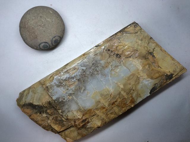 画像3: 天然砥石 正本山 山城銘砥 中世中山 敷き戸前のきわめて白い水浅黄烈梨地謎品種 7267