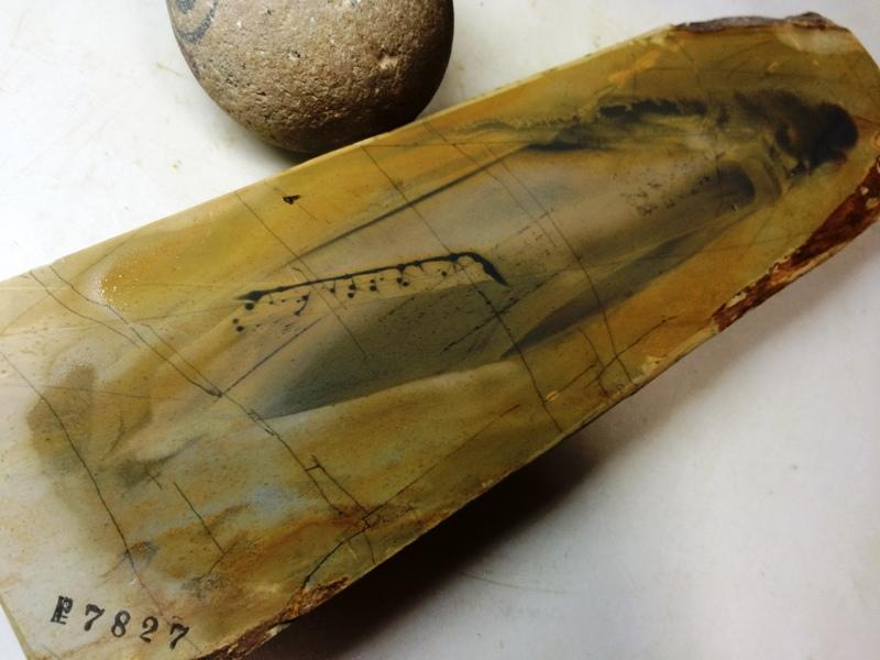 画像4: 天然砥石 正本山 山城銘砥 中世中山 なみと八寸 7827