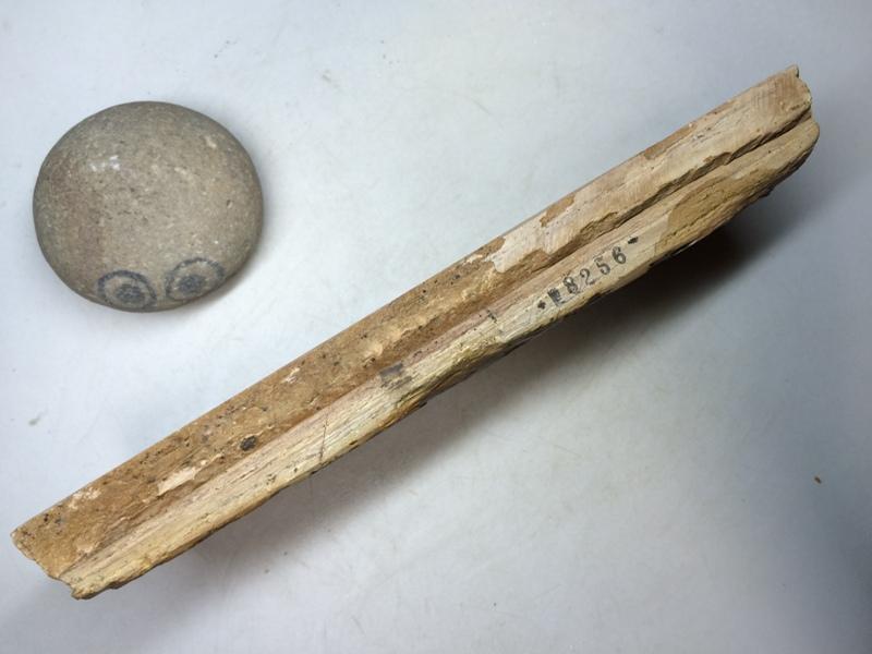 画像2: 天然砥石 正本山 山城銘砥 手挽き手はつり蓮華巣板 8256