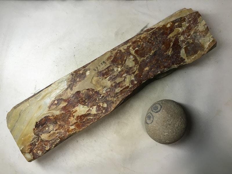 画像3: 天然砥石 正本山 山城銘砥中世中山戸前黄板尺 1.6Kg 9466