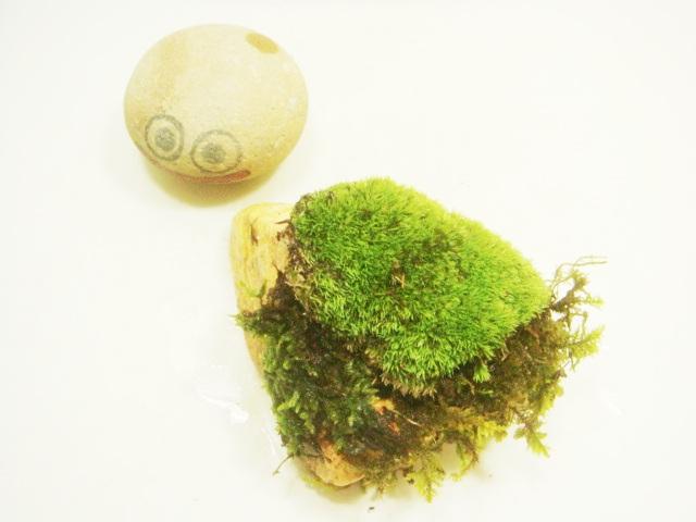 画像1: 伊予鉢 上尾白 おもこさん 山苔+はいごけ