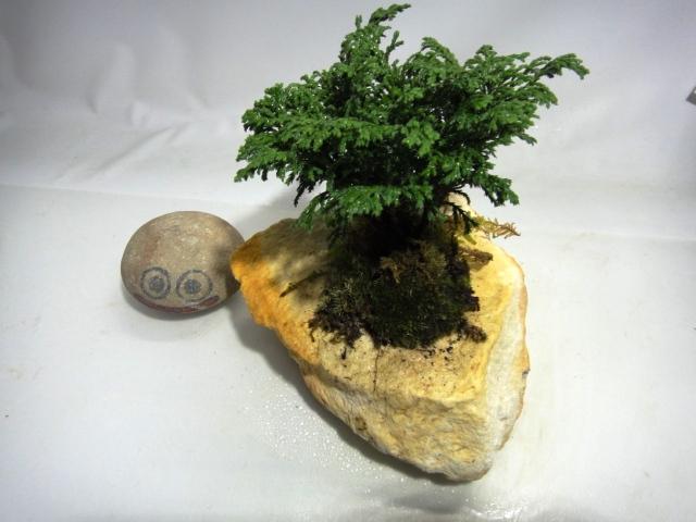 画像1: 伊予さゞれ鉢 50mm穴 1.1Kg  津山檜+山苔